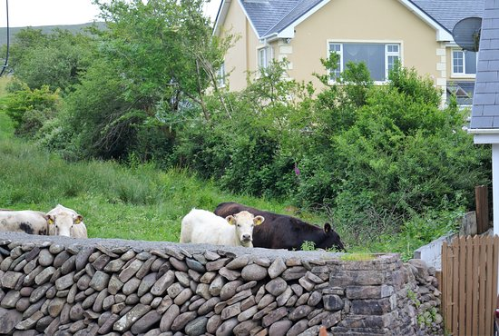 Annascaul, Ирландия: Good evening!