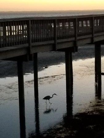 Duck Town Boardwalk照片