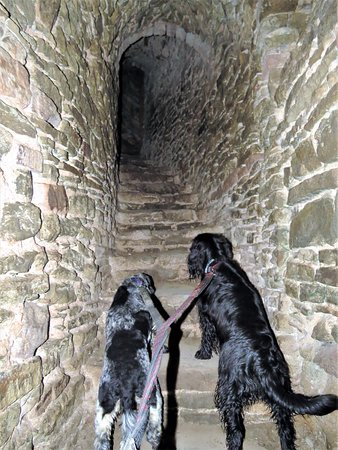 Ludlow Castle: Lots of spiral staircases to explore