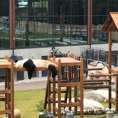 Ahtari Zoo照片