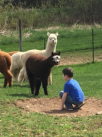 Kendall Creek Farms Alpacas