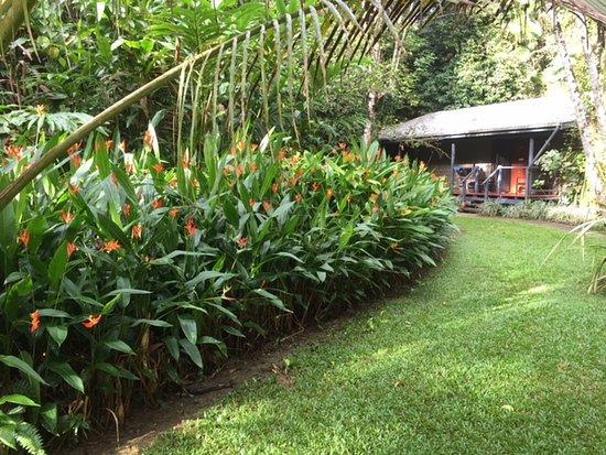Diwan, Australia: tropical garden