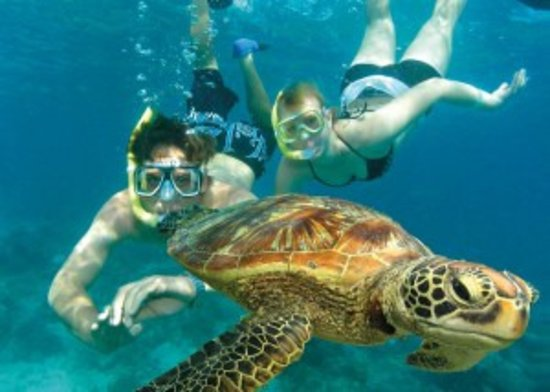 Whitsunday Fishing Charters: Guide to barrier reef fishing charter in the Whitsundays!