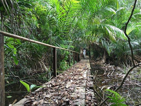 Boca Tapada, Costa Rica: sentier de balade dans le parc