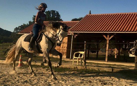Caval en Liberté