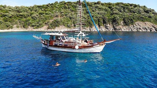 Ninemia Cruises