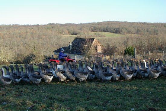 Badefols-sur-Dordogne照片