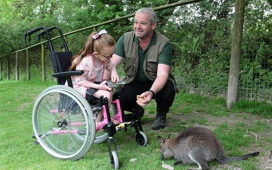 Exmoor Zoo: Meet and greet the wallabies