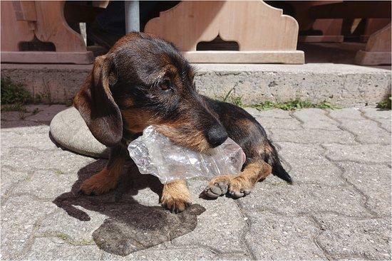 Lauenen, Switzerland: Die PET- Entsorgerin
