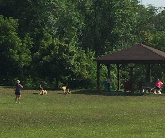 Wantage Dog Park