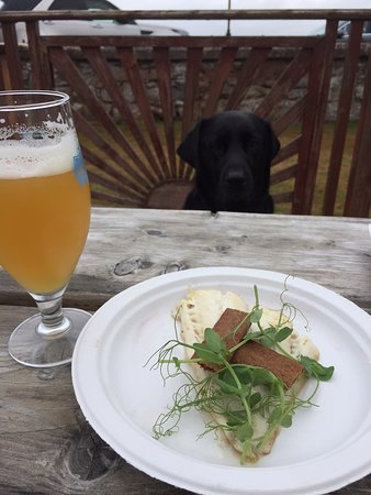 Rosemarkie, UK: Guinness the dog , was so happy with his lunch