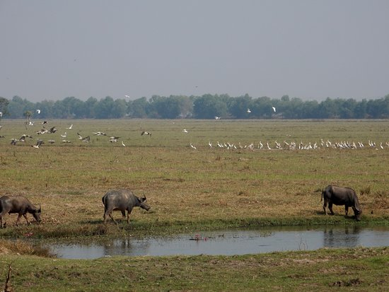 Sam Veasna Center for Wildlife Conservation (SVC): ATT Crane Reserve
