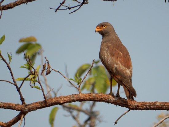 Sam Veasna Center for Wildlife Conservation (SVC): Tmatboey Eco-lodge