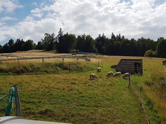 Vrbno Bobsleigh track