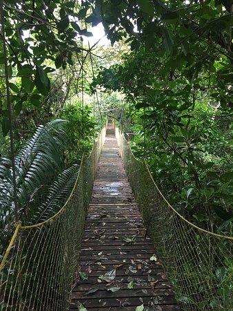 Manzanillo, Коста-Рика: passerelle dans le parc