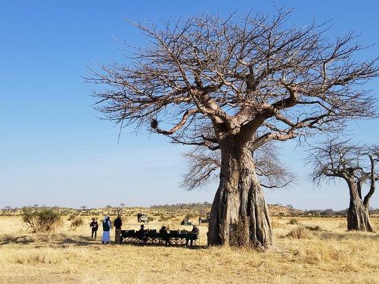 Ruaha National Park, Tanzania: Baobab breakfast. So appropriate for Ruaha!