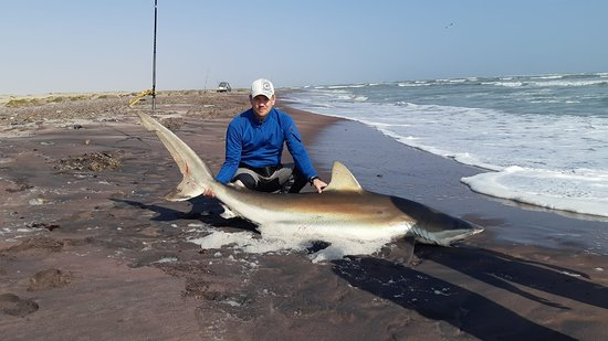 Hentiesbaai, Namibia: Bronze Whaler Shark of 105.8kg caught and released