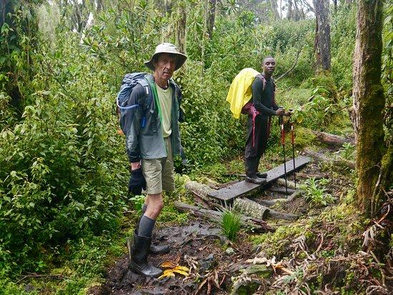 Rwenzori Mountains National Park, أوغندا: Montane forest zone. Still wearing Wellies.