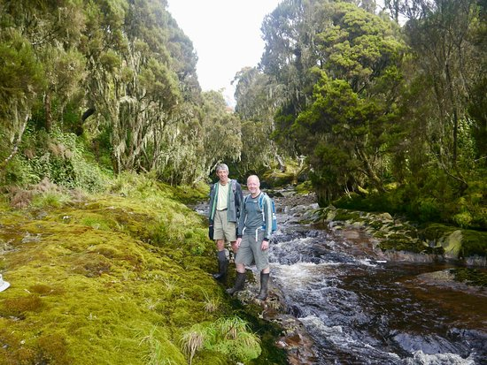 Rwenzori Mountains National Park, Uganda: Heather forest at Cathy's Falls.