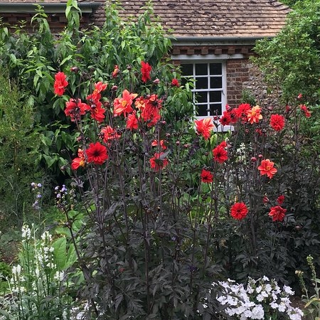 Fontwell, UK: Colourful flowes in the garden at Denmans