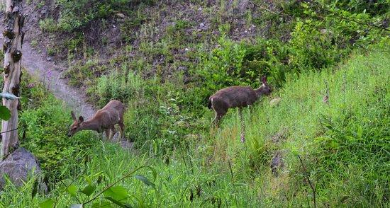 Deer on the Hummocks Trail
