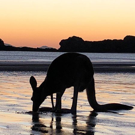 Cape Hillsborough, Australien: photo0.jpg
