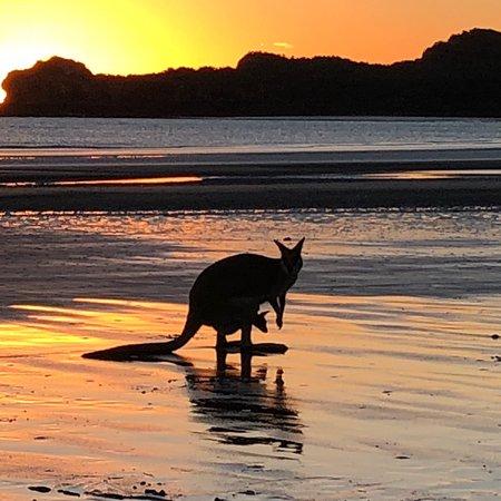Cape Hillsborough, Australien: photo1.jpg
