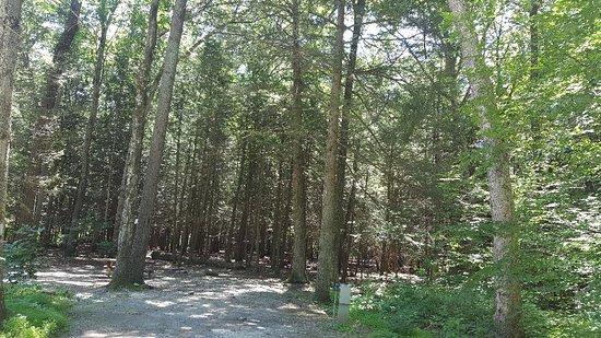 Dingmans Campground: 20180708_122441_large.jpg