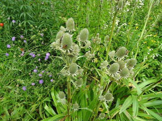 Botanische Tuin Alkmaar : Hortus alkmaar een tuin met medicinale kruiden en natuurplanten