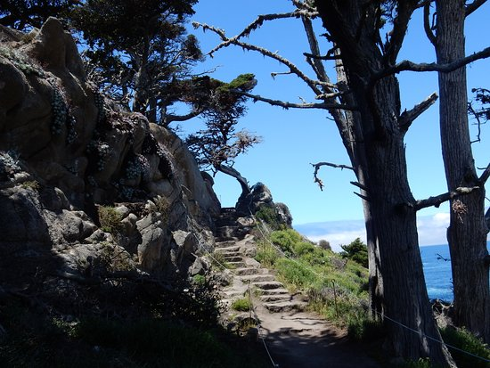 Point Lobos: Cypress Grove Trail