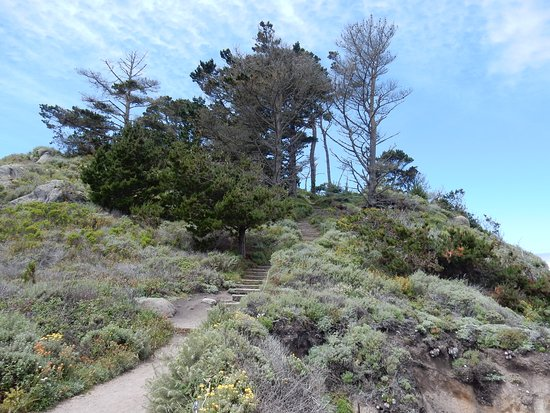 Point Lobos: Cypress Grove Trail 2