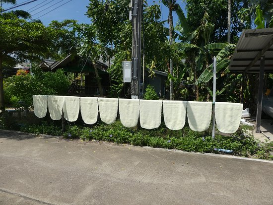 Trang Province, Thailand: hung out to dry