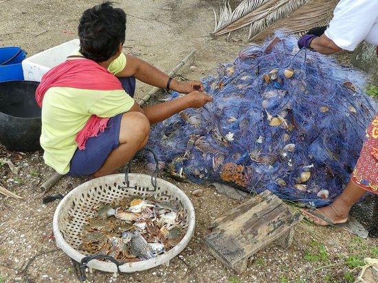 Trang Province, Thailand: crab fishing