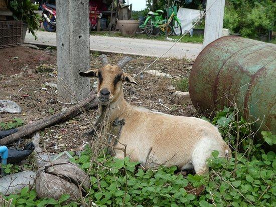 Trang Province, Thailand: siesta