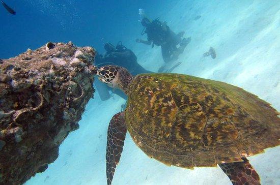 Tour de plongée pour les plongeurs...