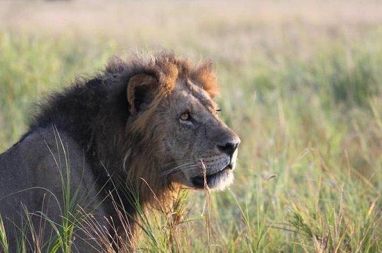 5 días de Safari
