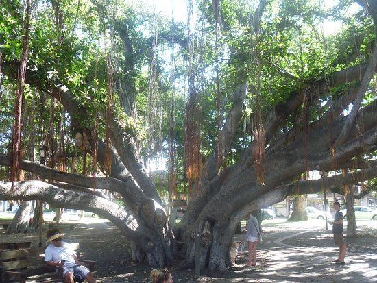 Banyan Tree Park Photo