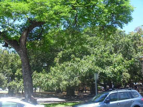 Banyan Tree Park Photo