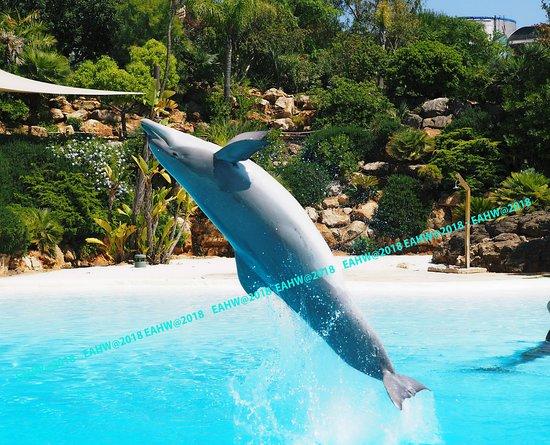 Zoomarine Algarve - Theme Park: Obrigado/obrigada voor de privé show
