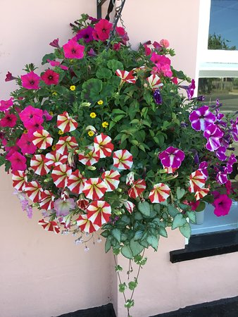 East Bergholt, UK: One of our lovely hanging baskets