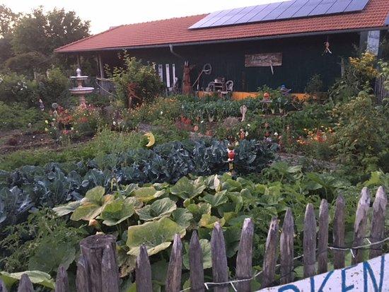 Aschau Im Chiemgau, Deutschland: Gemüse , Kraeuter , Blumen fürs eigene Restaurant