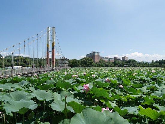 Deokjin Park
