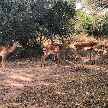 Lake Mburo National Park, Uganda: photo1.jpg