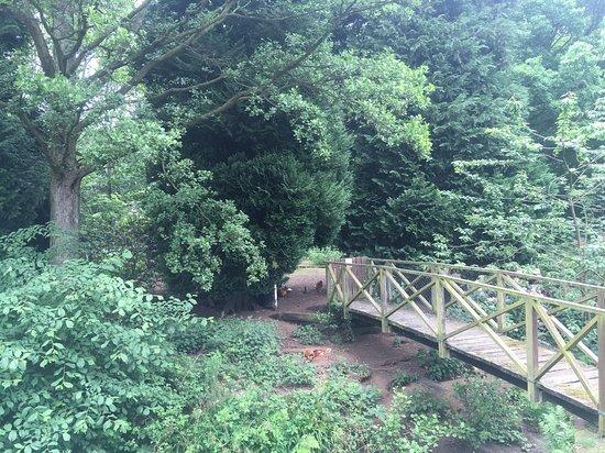 Egton, UK: Free Range Chickens