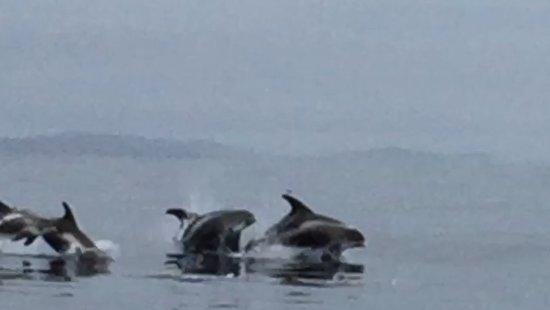 Witless Bay Photo