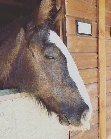Catherington Equestrian Centre Waterlooville 2019 All