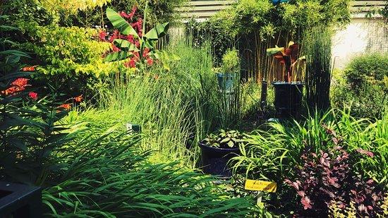 Le Chesnay, France: le jardin
