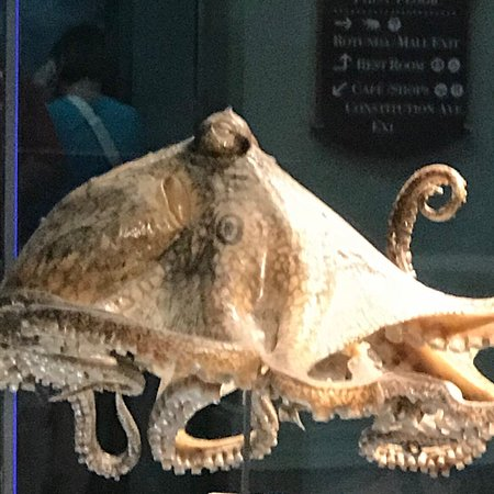 Smithsonian National Museum of Natural History: photo2.jpg