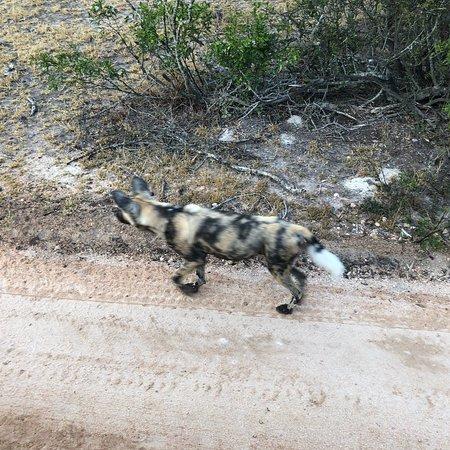Ulusaba Private Game Reserve, Sudáfrica: photo1.jpg