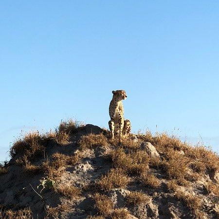 Ulusaba Private Game Reserve, Sudáfrica: photo3.jpg